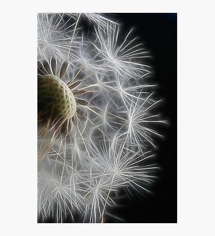 Dandelion Frost Photographic Print