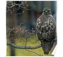 360 Fasinating Hawk Poster