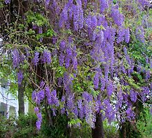 Purple Flower Tree by Cynthia48