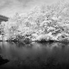 Infrared Panoramas by Troy Dodds