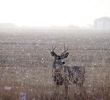 Mule Deer Buck In Snowstorm by postmsterjim0