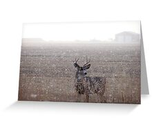 Mule Deer Buck In Snowstorm Greeting Card