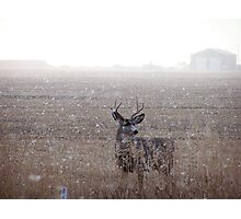 Mule Deer Buck In Snowstorm Photographic Print