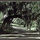 Shady Arched Walk by Ginny Schmidt