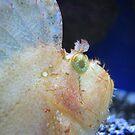 fish eye by paula whatley