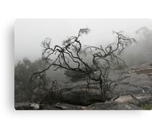 Rock Tree Metal Print