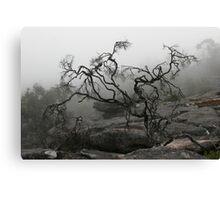 Rock Tree Canvas Print