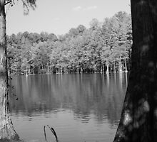 Trees in Water by William Helms