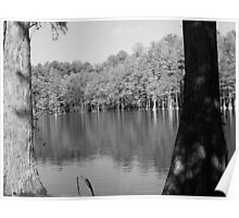 Trees in Water Poster