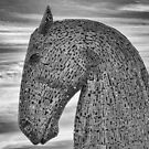 Kelpie Horse by M.S. Photography/Art
