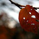 A tough start to autumn by gahuja