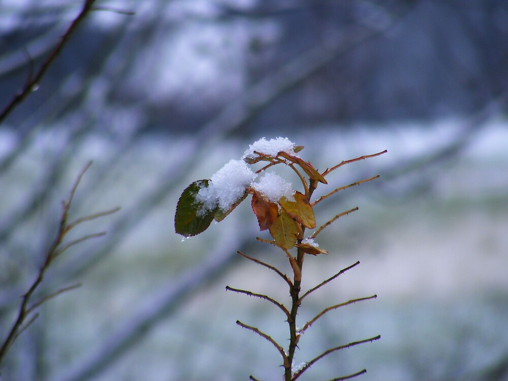 snowy leaves by rebecca smith