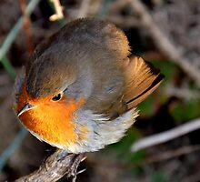 Robin by Photography by Mathilde