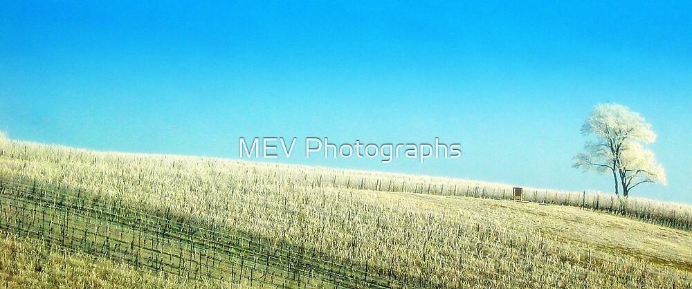 Winter Vineyard by MEV Photographs