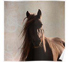 Sunlit fell pony Poster