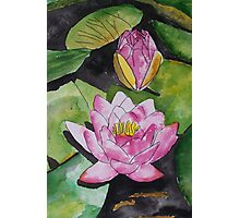 water lily flower pad Photographic Print