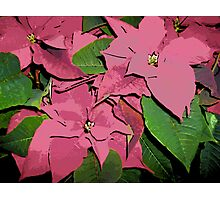 Comic Abstract Poinsetta Plant Photographic Print