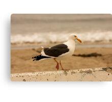 Walking Seagull Canvas Print