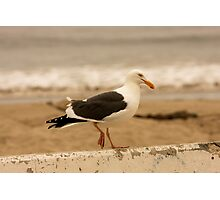 Walking Seagull Photographic Print