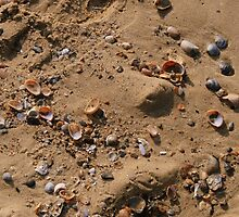 Shells by Roxy J