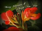 Merry Christmas Happy New Year Card - Red Canna Lily by MotherNature
