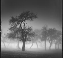 Standing Tall by redtree