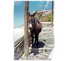 Just Resting, Santorini Poster