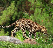 Java Leopard by Ismail Basymeleh