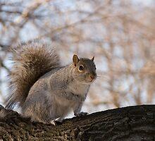 Squirrel at the park by Gleb Zverinskiy