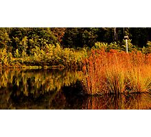 Red Reeds Photographic Print