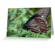 Zebra Longwing butterfly. Greeting Card