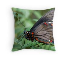 Zebra Longwing butterfly. Throw Pillow
