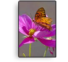 Gulf Fritillary Butterfly. Canvas Print