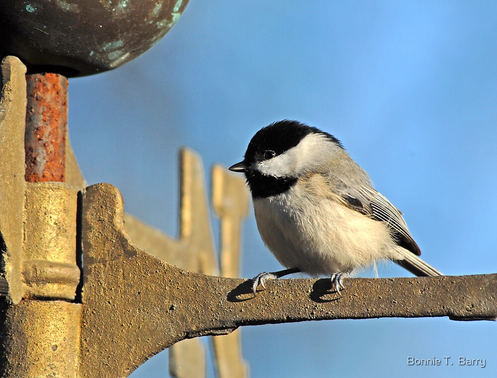 Chickadee on Christmas Morning by Bonnie T.  Barry