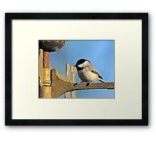 Chickadee on Christmas Morning Framed Print