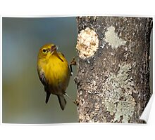 At the Suet Log Poster