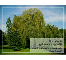 A Tree of LIfe Photographic Print