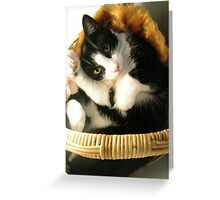 Boris in a basket Greeting Card