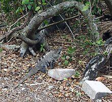 The iguana by Christian  Zammit