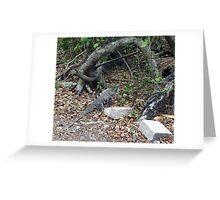The iguana Greeting Card