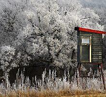 frost by Dan Shalloe