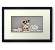2 Tabby Kittens in Yarn Basket Framed Print
