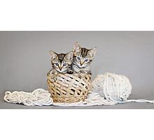 2 Tabby Kittens in Yarn Basket Photographic Print