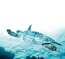 Turtle Gliding by Andrew Bret Wallis