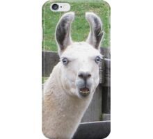 NO!     I AM NOT THE EASTER BUNNY!! iPhone Case/Skin