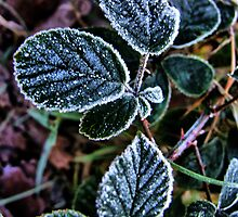 Frosty Highlights by Paul Gibbons