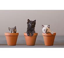 Bloomin' Meowers Photographic Print