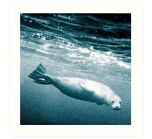 Seal Below the Surf Art Print