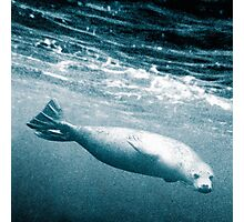 Seal Below the Surf Photographic Print