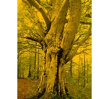 Imposing Tree Photographic Print